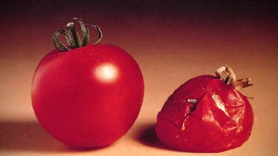 Featured image for Test Tube Tomato