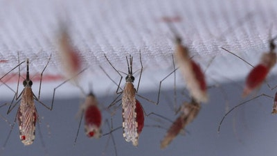 Featured image for Malaria and the Silent Spring